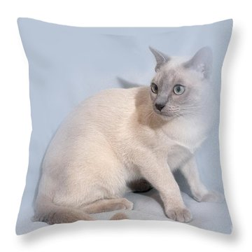 Pastel Angel Kitty Throw Pillow by Linda Phelps