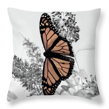 Pastel Monarch On Black And White Throw Pillow
