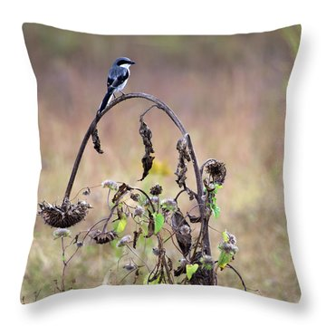 Pastoral Scene Bird On Sunflower Throw Pillow