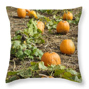 Throw Pillow featuring the photograph Patchin' by Christi Kraft