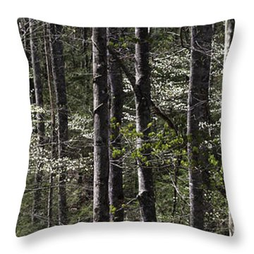 Patchwork Dogwood Panorama Throw Pillow