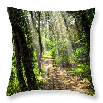 Path In Sunlit Forest Throw Pillow by Elena Elisseeva