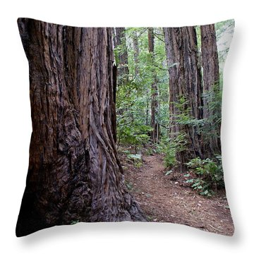 Pathway Through A Redwood Forest On Mt Tamalpais Throw Pillow