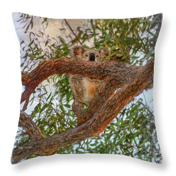 Throw Pillow featuring the photograph Patience Brings Koalas by Hanny Heim