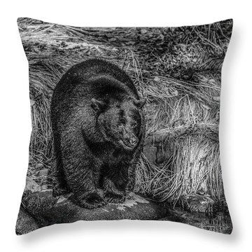 Patient Black Bear Throw Pillow