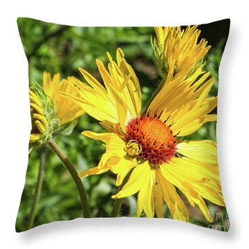 Patient Spider Throw Pillow