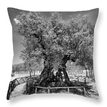 Patriarch Olive Tree Throw Pillow by Alan Toepfer