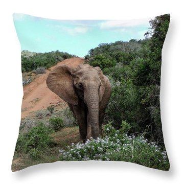Pause To Smell The Flowers Throw Pillow