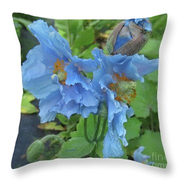 Pavot Bleu // Meconopsis Betonicifolia 1 // Blue Poppy Throw Pillow