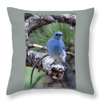 Paying Attention Throw Pillow