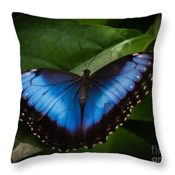Peaceful Landing Throw Pillow