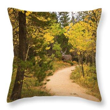 Peaceful Walk Throw Pillow