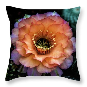 Throw Pillow featuring the photograph Peach Desert Glow Bloom by Julie Palencia