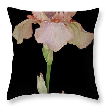 Peach Iris Throw Pillow by Michael Peychich