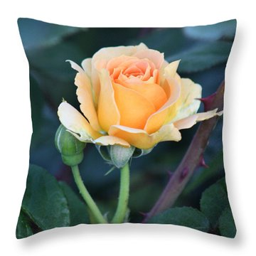 Peach Rose 3 Throw Pillow