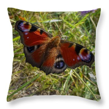 Throw Pillow featuring the photograph Peacock Butterfly by Jean Bernard Roussilhe
