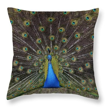 Throw Pillow featuring the photograph Peacock Displaying Feathers by Bradford Martin