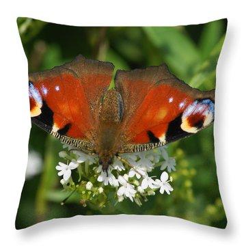 Peacock Feeding Throw Pillow