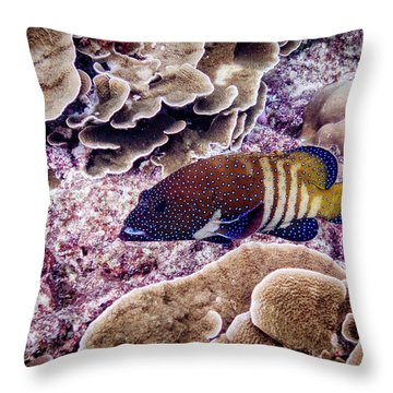Peacock Grouper Throw Pillows