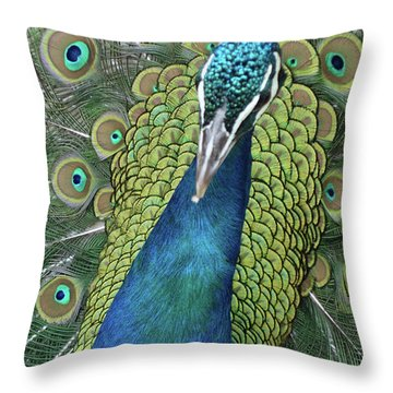 Throw Pillow featuring the photograph Peacock by Matthew Bamberg