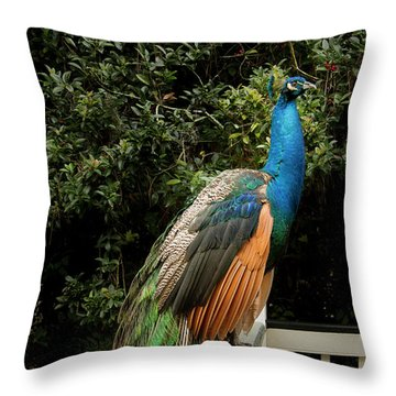 Peacock On A Fence Throw Pillow by Jean Noren