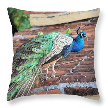 Peacock On Rooftop Throw Pillow