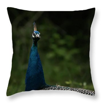 Peacock Potrait Throw Pillow