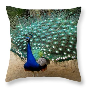 Peacock Showing All Feathers Throw Pillow by Patricia Barmatz