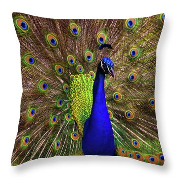 Throw Pillow featuring the photograph Peacock Showing Breeding Plumage In Jupiter, Florida by Justin Kelefas