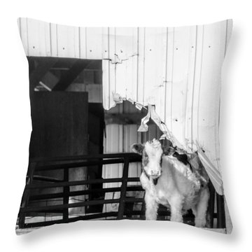 Peak-a-boo Calf Throw Pillow