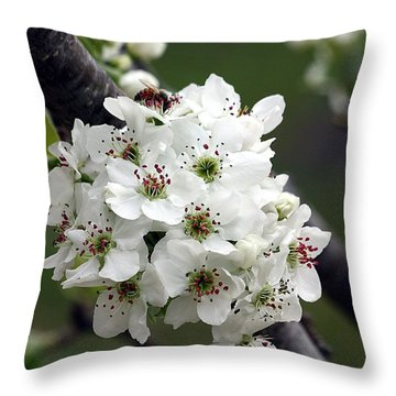 Throw Pillow featuring the photograph Pear Blossoms In Spring by Sheila Brown