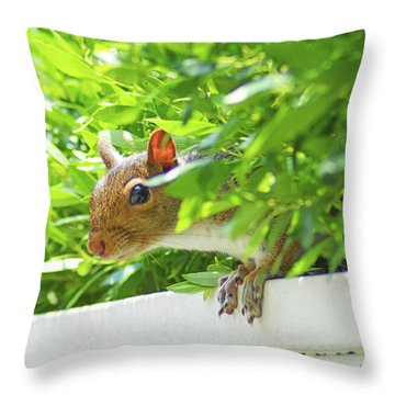 Peek-a-boo Gray Squirrel Throw Pillow