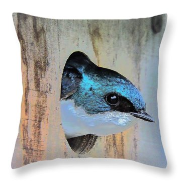 Peek-a-blue Throw Pillow