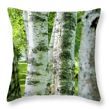 Throw Pillow featuring the photograph Peek A Boo Birch by Greg Fortier