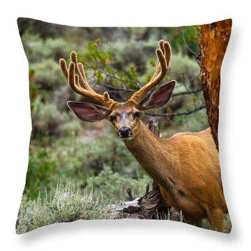 Peek A Boo Buck Throw Pillow