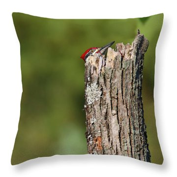 Peek A Boo Pileated Woodpecker Throw Pillow