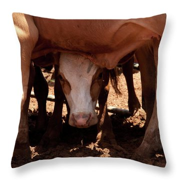 Throw Pillow featuring the photograph Peek-a-boo by Roger Mullenhour