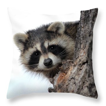 Throw Pillow featuring the photograph Peek-a-boo by Shane Bechler