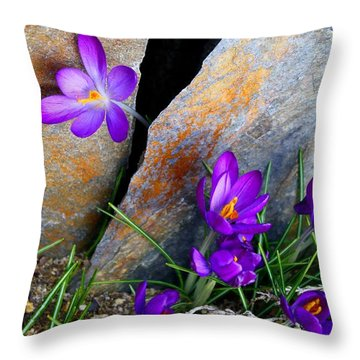 Peek Throw Pillow by Kathryn Meyer