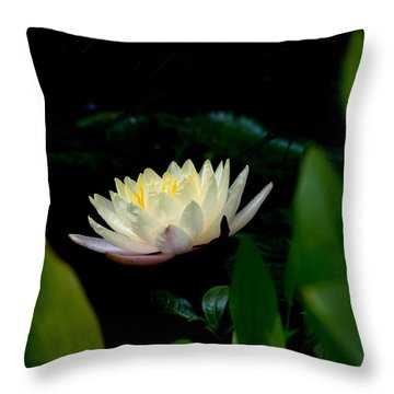 Peekaboo Lemon Water Lily Throw Pillow
