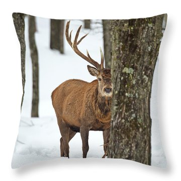 Throw Pillow featuring the photograph Peekaboo.. by Nina Stavlund
