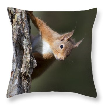 Throw Pillow featuring the photograph Peekaboo - Red Squirrel #29 by Karen Van Der Zijden