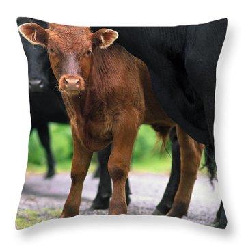 Peeking Calf  Throw Pillow by Sally Weigand