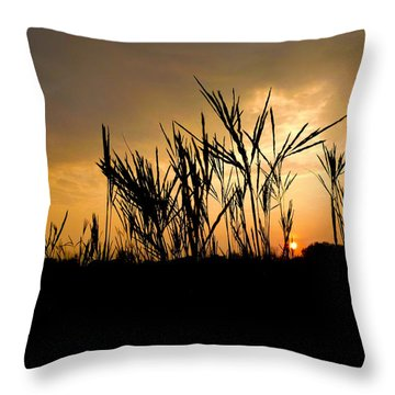 Peeking Out Throw Pillow by Tim Good