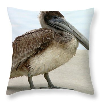 Pelican Close-up Throw Pillow by Al Powell Photography USA