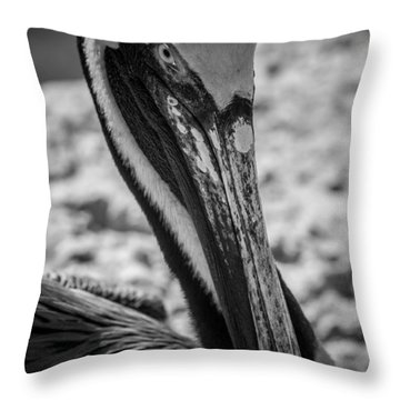 Throw Pillow featuring the photograph Pelican In Florida by Jason Moynihan