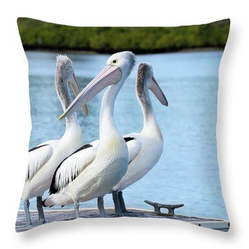 Pelicans 6663. Throw Pillow by Kevin Chippindall