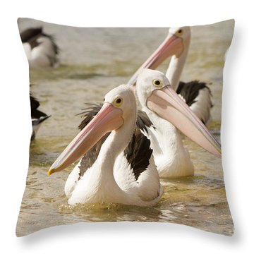 Pelicans Throw Pillow