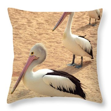Throw Pillow featuring the photograph Pelicans Seriously Chillin' by T Brian Jones