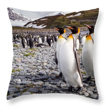 Winter Landscape Throw Pillows